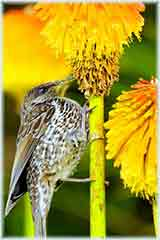 Bird on flower jigsaw puzzle