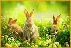 Mobile - PC Bunnies in Meadow jigsaw puzzle