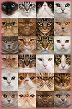 Cat Collage jigsaw puzzle