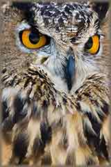Great Horned Owl closeup jigsaw puzzle