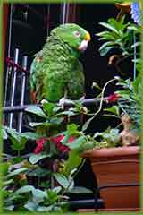 Green parrot home jigsaw puzzle