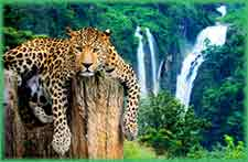 Mobile - PC Leopard on tree jigsaw puzzle
