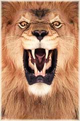 Lion roaring jigsaw puzzle