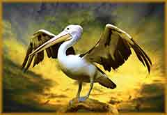Mobile - PC Pelican on tree trunk jigsaw puzzle