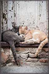 Street cats jigsaw puzzle