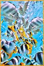 butterfly fish school puzzle