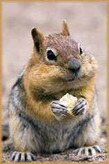eating squirrel jigsaw puzzle