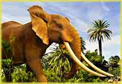 Mobile - PC elephant in wilderness jigsaw puzzle