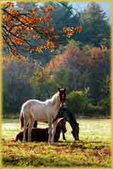 fall day horses puzzle
