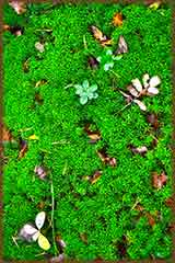 green moss puzzle