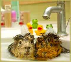 Mobile - PC hamsters bathing jigsaw puzzle