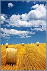 hay bales in field jigsaw puzzle