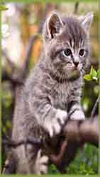 Mobile - PC kitten in tree jigsaw puzzle