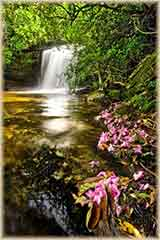 lush rain forest waterfall puzzle