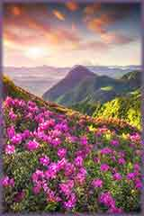 mountains rhododendron flowers jigsaw puzzle