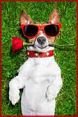 red rose dog jigsaw puzzle