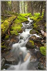 small creek jigsaw puzzle