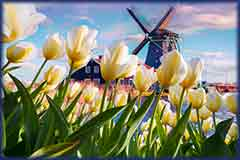 Mobile - PC Group of  windmill among tulips jigsaw puzzle