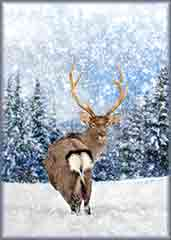 Mobile - PC winter time deer jigsaw puzzle