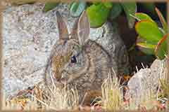Mobile - PC young rabbit jigsaw puzzle