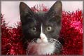 Christmas Cat jigsaw puzzles