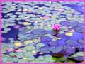 Lily Pond jigsaw puzzles