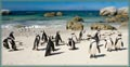 Penguins at the Beach jigaw puzzle
