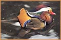Wood Duck jigsaw puzzles