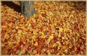 Leaves  jigsaw puzzle