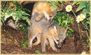 Playful Foxes  jigsaw puzzle