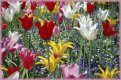 Spring  jigsaw puzzle